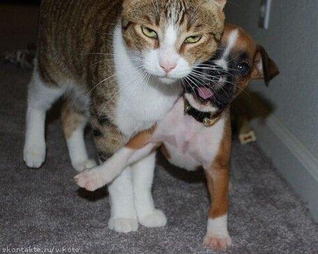 смешное видео про кошек онлайн смотреть бесплатно: