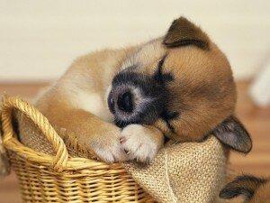 Домик для маленькой собаки своими руками
