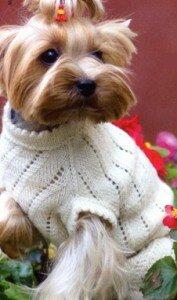 схемы вязания одежды для маленьких собак