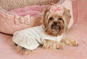Платье для собаки выкройка