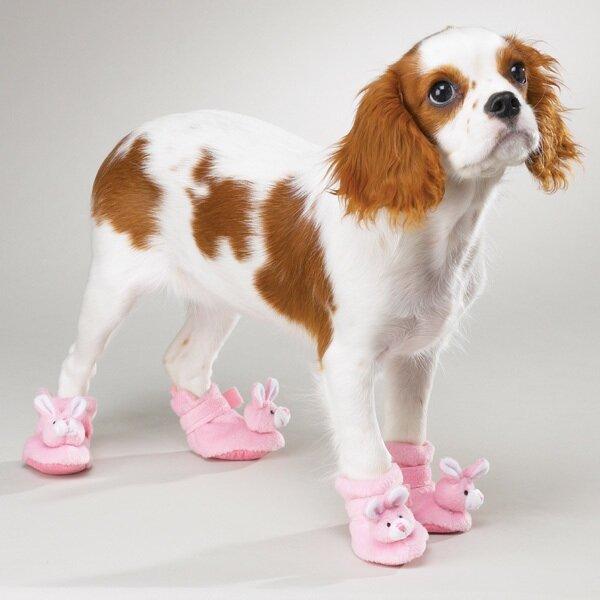 Вязаная обувь для собак