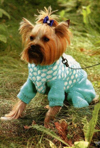Вязанная одежда для собак