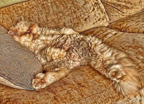 Кошки на природе или найди кота