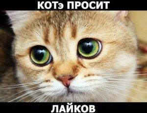 Забавные кошки на видео