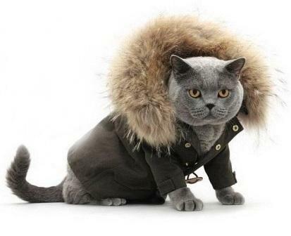 кошки в одежках