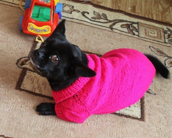 Выкройки вязаной одежды для собак
