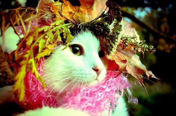 http://catdog.maqicknittinq.ru/wp-content/uploads/2012/10/yFuHfrK_hCA.jpg