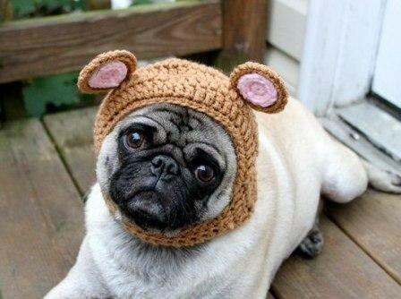 шапочки для собаки есть в
