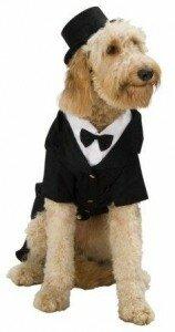 Как сшить костюм для собаки