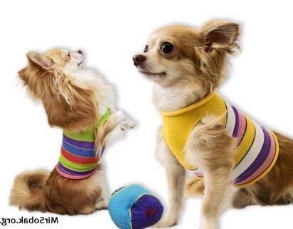Вязать комбинезон для собаки своими руками