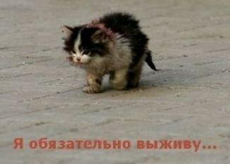 В Кирове пройдет выставка бездомных кошек
