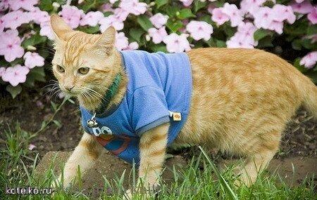 Одежда для кошек своими