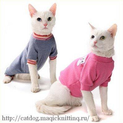 Выкройки одежды для кошек