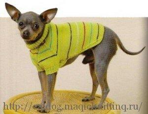 связать свитер спицами для собаки