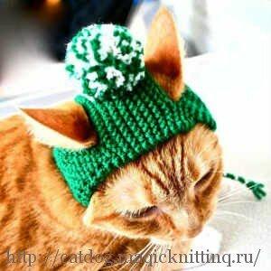 Вязаные шапочки для кошки