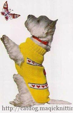 Вязаный жилет для собаки
